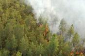 Посещать леса Верхнекамского района запрещено