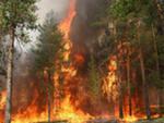 В лесах Кировской области наблюдается высокая пожароопасность