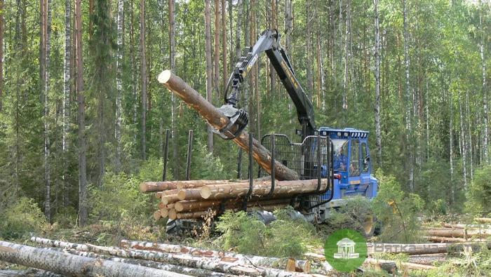 В регионе разработают стратегию развития лесного комплекса до 2030 года