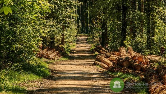 В 2018 году деятельность лесного комплекса принесла бюджету области 2,5 млрд рублей