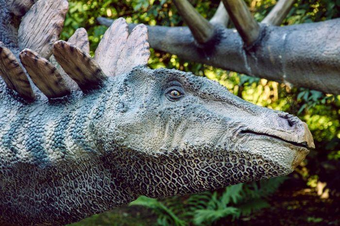 В Кировской области появится брендовый турмаршрут «Динозавры на Вятке»