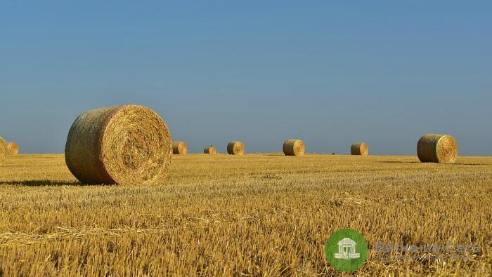 Воры украли из колхоза в Котельничском районе 50 тонн сена, чтобы накормить своих лошадей