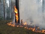 Из 7 лесных пожаров справиться не удалось с двумя