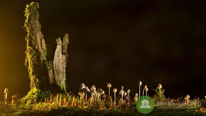 В Лебяжье в результате отравления грибами погибли три человека