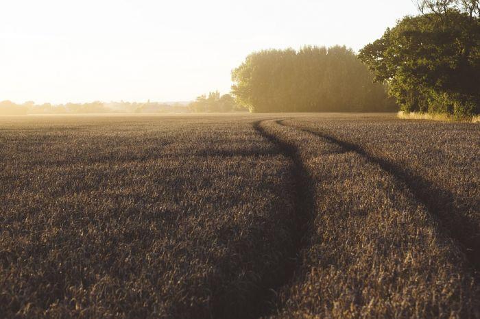 Депутат предложил бесплатно раздавать по гектару земли в Кировской области
