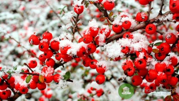 Погода 17 ноября