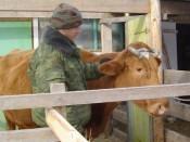 На поддержку села в 2012 г. бюджетом области предусмотрено 1 млрд. рублей