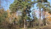 Лес оцифруют