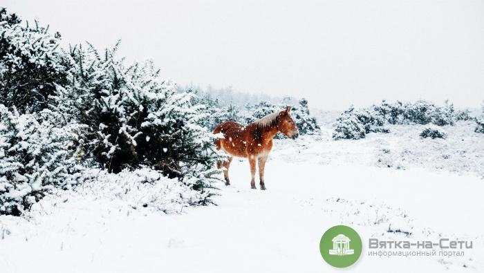 Погода 29 декабря