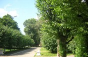 Кировчан приглашают обсудить вопросы зелёных насаждений
