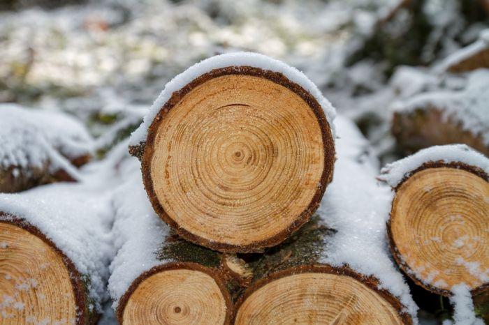 Житель Фаленского района заплатит за незаконную вырубку леса почти миллион