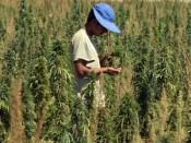 3 года за три мешка марихуаны дали кировчанину