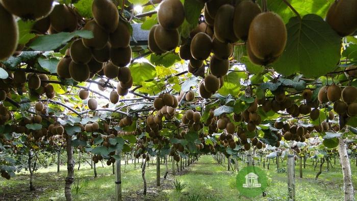 В I квартале этого года в регион завезли 46 тонн зараженных фруктов