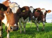 Животноводство области: существенные положительные изменения