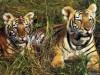 «Животные в открытках»