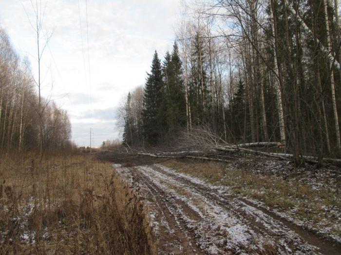 В Слободском районе рабочего убило упавшим деревом