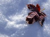 Последняя неделя зимы