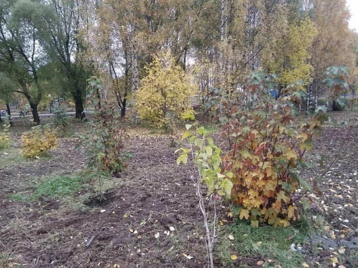 В Кочуровском парке начали посадку деревьев