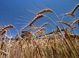 Ущерб от засухи в Кировской области составляет 65 миллионов рублей