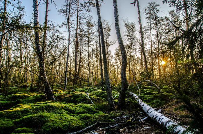 В музее Васнецовых откроется выставка, посвященная Году экологии