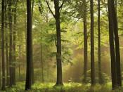"""Дожди """"разрешили"""" кировчанам ходить в лес"""