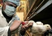 Ветеринарные станции получили новые внедорожники