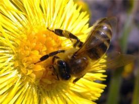 В Кирове будут продавать только натуральный мёд