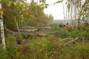 Кировские торфяники станут «рассадником» ягод