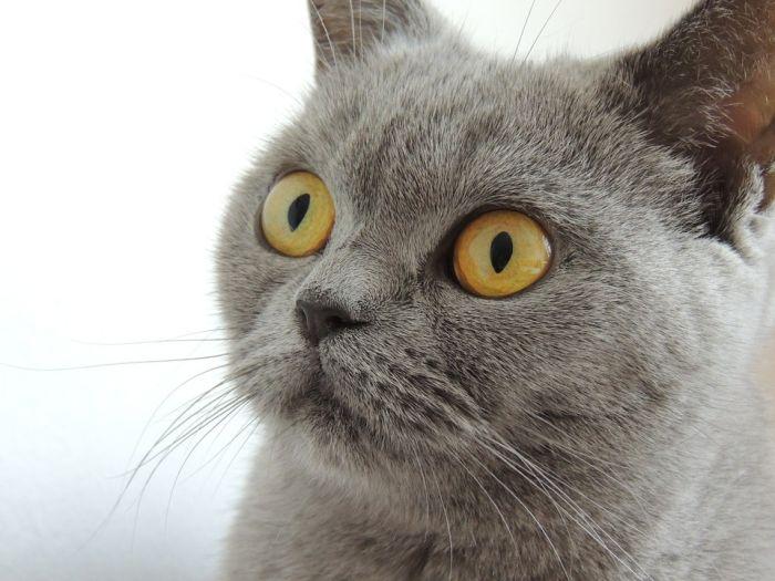 ВКирове напост главы города посоветовали выбрать кота
