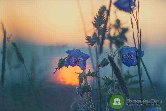 Последняя неделя лета: какая погода ждёт кировчан в ближайшие дни