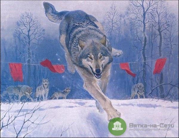 Жители Подосиновского района жалуются на волков