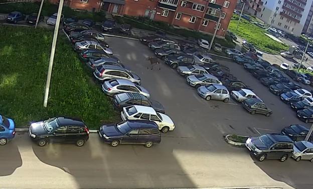 Во дворе дома по ул. Ленина разгуливал лось (видео)