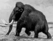 Летом в Котельниче начнутся раскопки мамонта