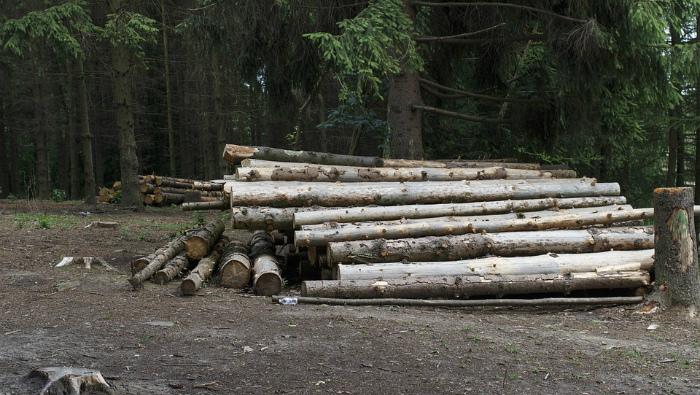 УК «Лесхоз» исключен из перечня приоритетных проектов