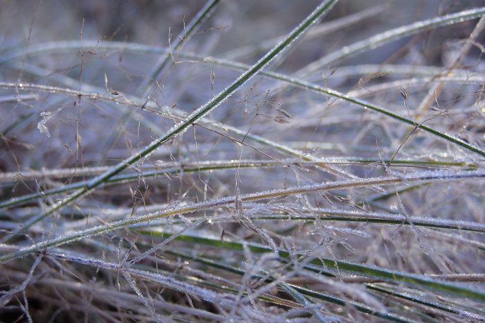 В МЧС предупреждают кировчан о заморозках