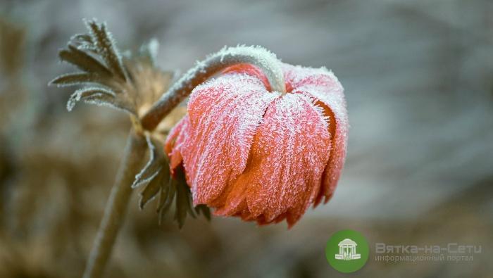 В Кировской области объявили метеопредупреждение из-за заморозков
