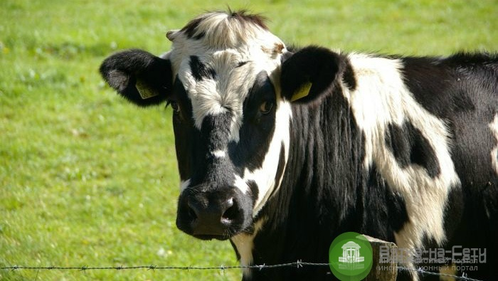 «Слободской молочный комбинат» признан банкротом