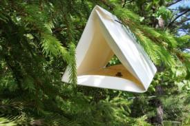 Сибирский шелкопряд облюбовал леса Кировской области
