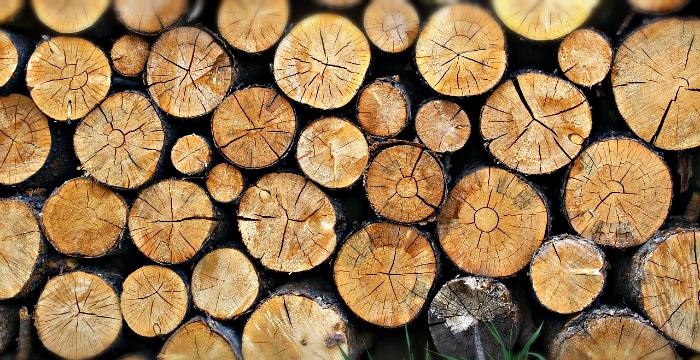 В Кировской области украли древесину, выставленную на аукцион
