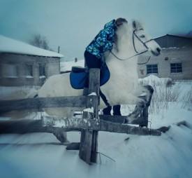 Весь Слободской ищет белую лошадь