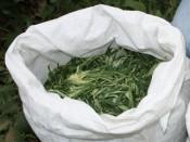 4 мешка марихуаны