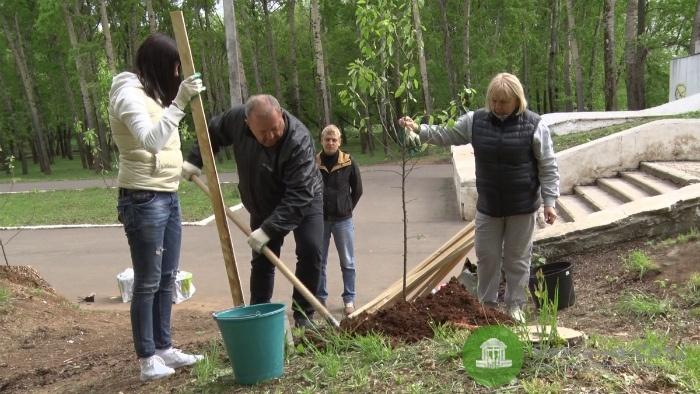 Взамен 6 вырубленных деревьев в парке имени Кирова высадили 15 яблонь