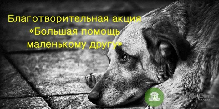 В Кирове продолжается акция «Большая помощь маленькому другу»