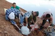 Коллекцию рептилий Вятского палеонтологического музея пополнила новая находка