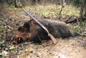 5551 животное будет убито в области в 2012- 2013 году
