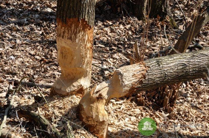 В Уржумском районе мастер лесосеки признан виновным в гибели рабочего
