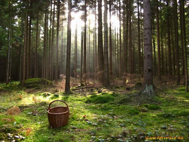Геи заблудились в лесу