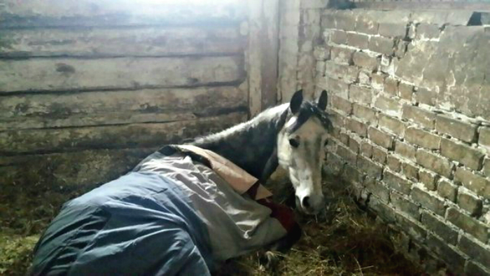 Лошадям, изъятым из частной конюшни, требуется лечение