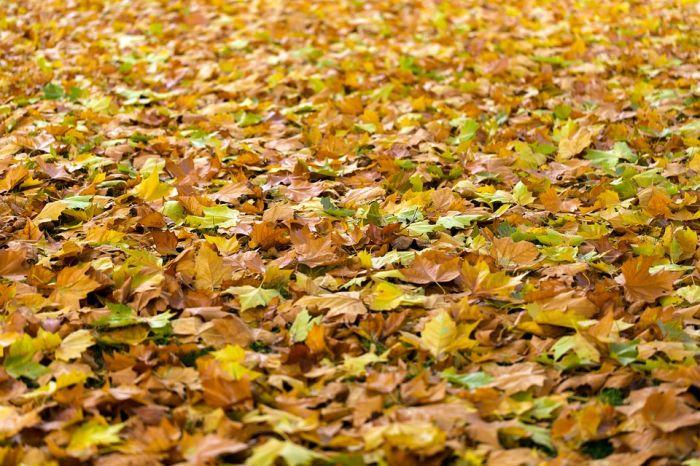 Погода 13 октября