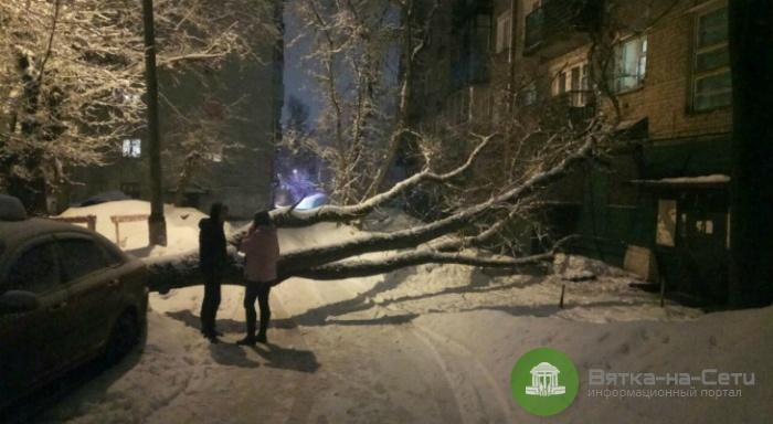 В Кирове упавшее аварийное дерево разбило окно в доме и помяло машину